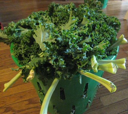 Our overflowing basket of kale