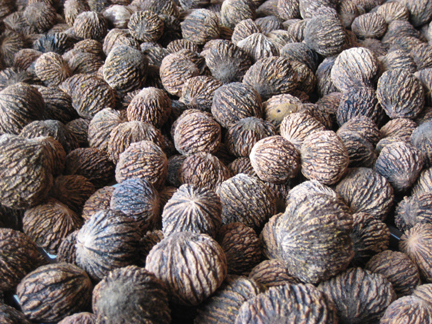 Unshelled black walnuts