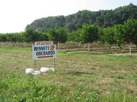 Bennett Orchards sign, peach picking